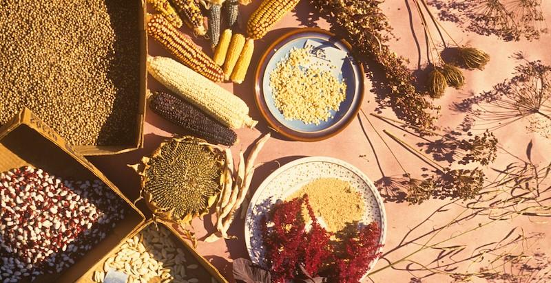 יתרונות השימוש בזרעים אורגנים