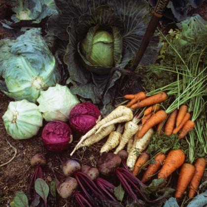 זרעי מורשת - הבנק שלנו