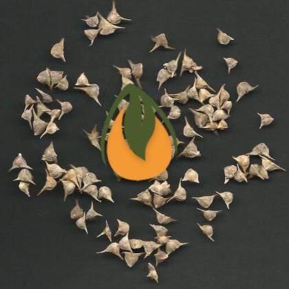 זרעי מורשת - הזרעים שלנו
