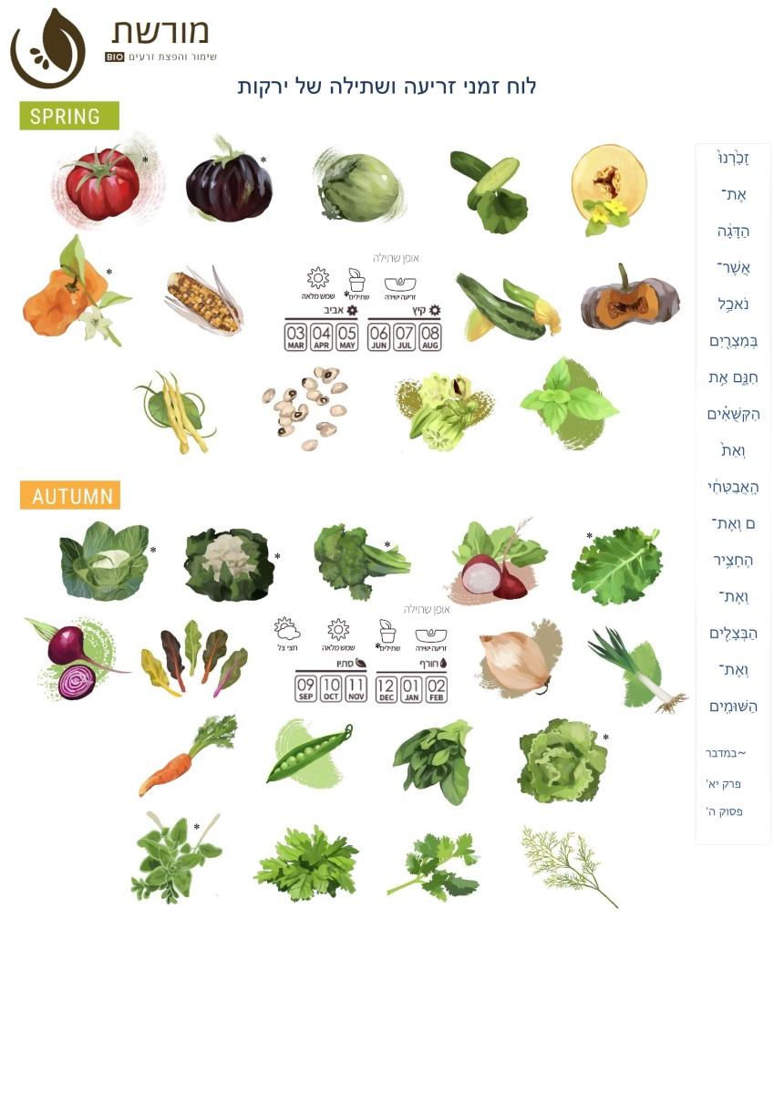 לוח זמני זריעה ושתילה של ירקות