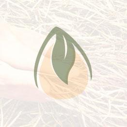 Runder Schwarzer Winter Radish Seeds