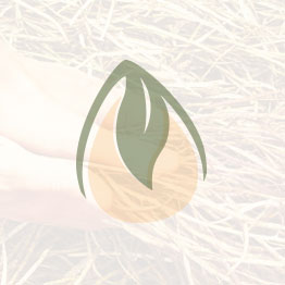 זרעים- זוטה לבנה
