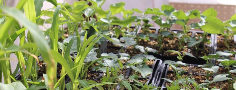 Sowing Seeds For Your Garden