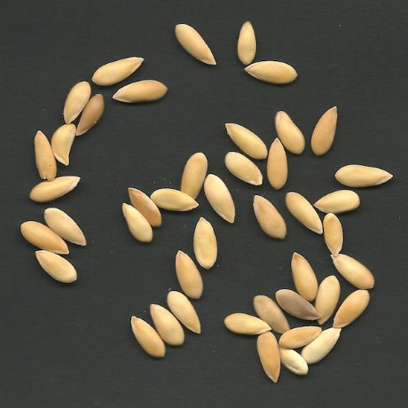 Seed Saving Instructions